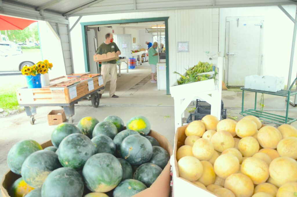 Melons are in the J & D pavilion. Behind them, David Milholen brings in more tomatoes from the cooler.