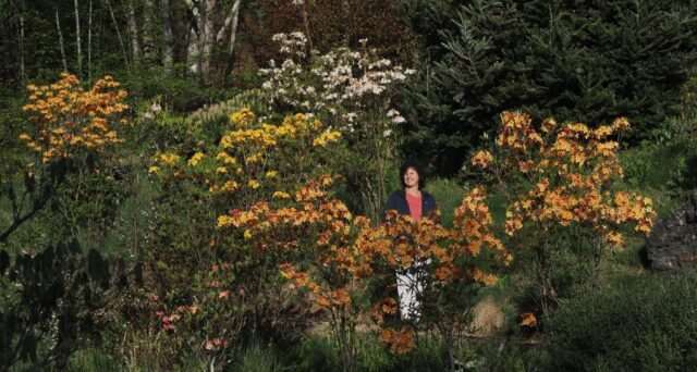 At the home of the speaker, Dr. Thomas Ranney, you will find a field of incredible blossoms. Amira Ranney is standing with various deciduous azalea hybrids.  Photo courtesy of Thomas Ranney.