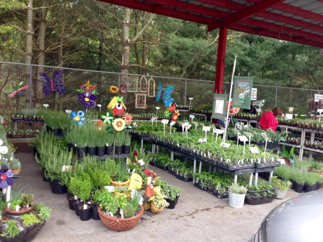 There are hundreds of plants from which to choose at the Spring Herb Festival. Photo courtesy of Jeannie Dunn of Red Moon Herbs.