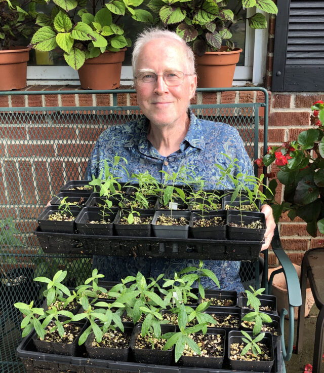 A 3-part video program is presented by John Bowen, an   Extension Master Gardener Volunteer. with tips and tricks for starting seeds indoors and tending the young plants. This can be found on their website. Photo courtesy of BCMGV.