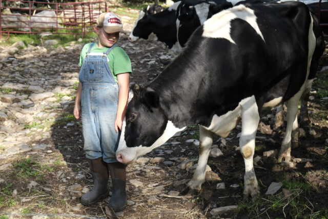 The English Farmstead in Marion make their cheeses--both hard and soft-- from milk produced on the site.  Photo courtesy of Sam English.